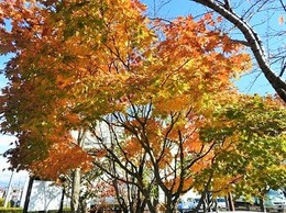 20171106紅葉の風景