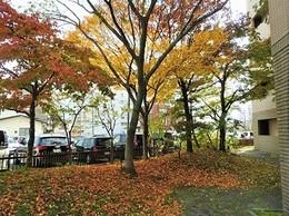 落葉の風景