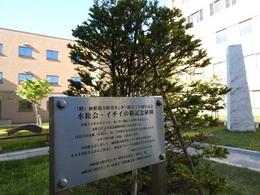 記念植樹のイチイ.JPG