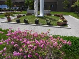 中庭の花壇.JPG