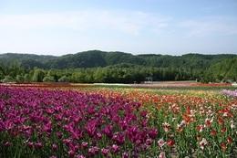 滝野すずらん丘陵公園.JPG